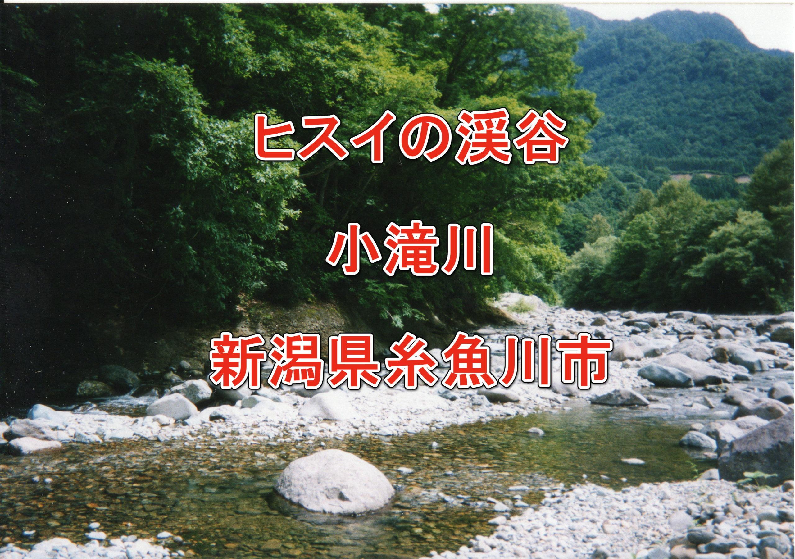 小滝川_フライフィッシング