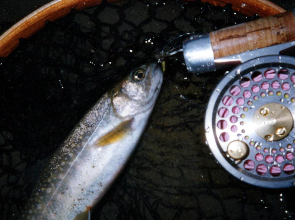 青海川の岩魚2